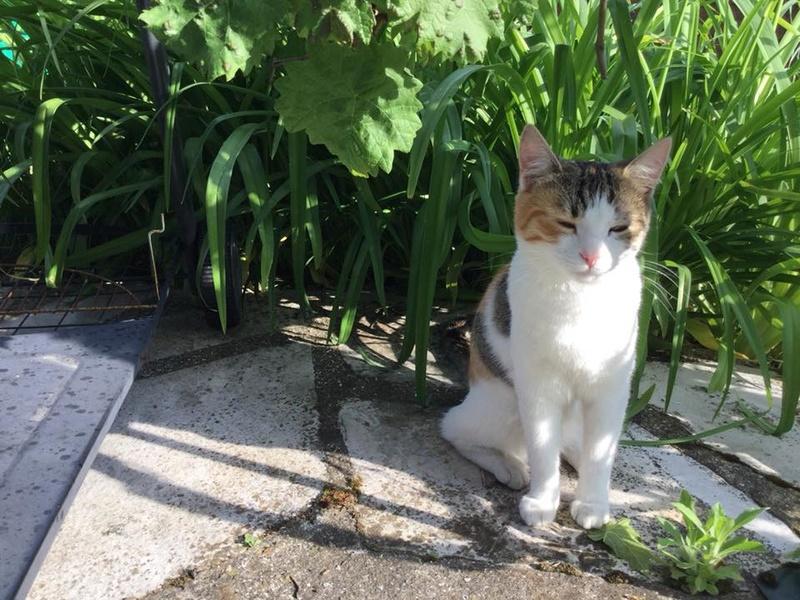 CALICE (ex KAÏNA) - chat femelle, née en fin juillet 2017 - En FA chez Abysse (depart92) - ADOPTEE PAR LAURE (95) - Page 2 Kaina114
