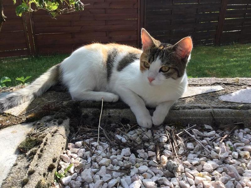CALICE (ex KAÏNA) - chat femelle, née en fin juillet 2017 - En FA chez Abysse (depart92) - ADOPTEE PAR LAURE (95) - Page 2 Kaina13