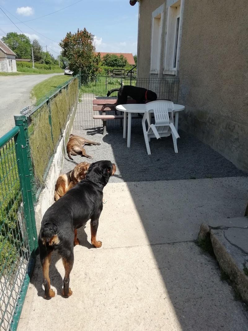 KENZA - femelle Rottweiler de grande taille, née environ en février 2010 (PASCANI) - REMEMBER ME LAND - ADOPTEE PAR LAURENCE (58) - Page 2 Kenza110