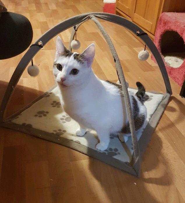 VODKA (ex KIARA) - chat femelle handicapée, née environ en 2015 - chez Lucian - Réservée FA par Abysse - ADOPTEE PAR VALERIE (92) Kiara10