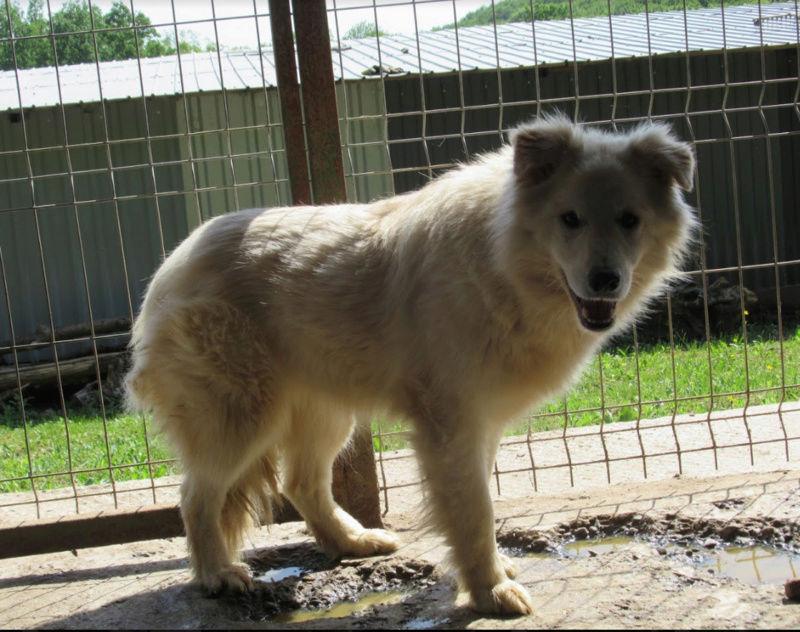 KIOWA !! + de 4 ans de box !! femelle, née environ en mars 2014, taille moyenne - REMEMBER ME LAND - Page 2 Kiowa10