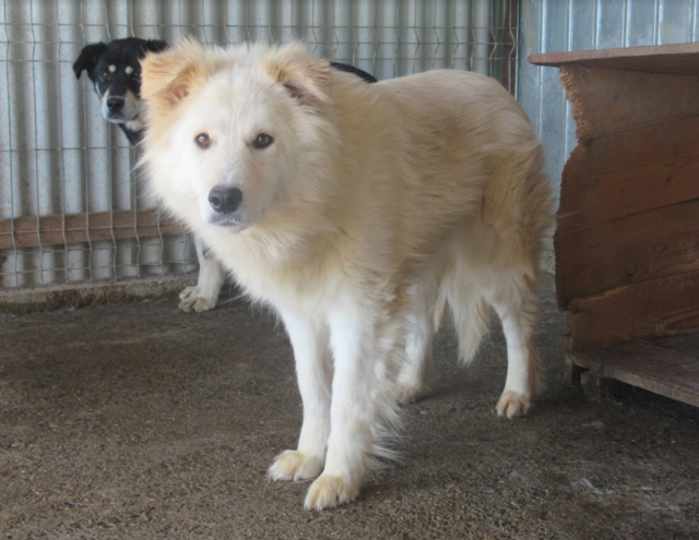 KIOWA !! + de 3 ans de box !! femelle, née environ en mars 2014, taille moyenne (Pascani)- REMEMBER ME LAND - Page 2 Kiowa110