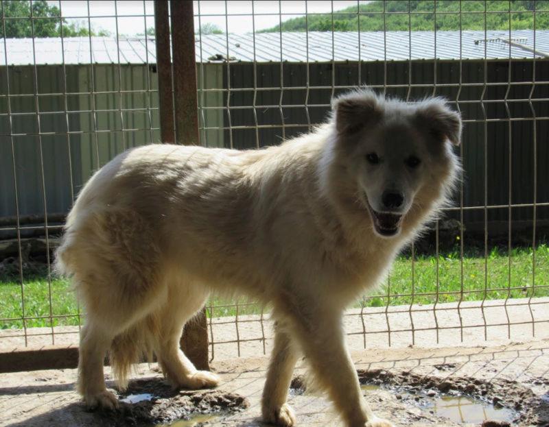 KIOWA !! + de 3 ans de box !! femelle, née environ en mars 2014, taille moyenne (Pascani)- REMEMBER ME LAND - Page 2 Kiowa111