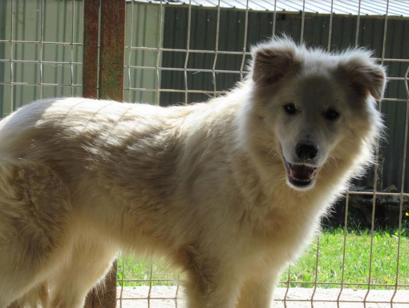 KIOWA !! + de 3 ans de box !! femelle, née environ en mars 2014, taille moyenne (Pascani)- REMEMBER ME LAND - Page 2 Kiowa210