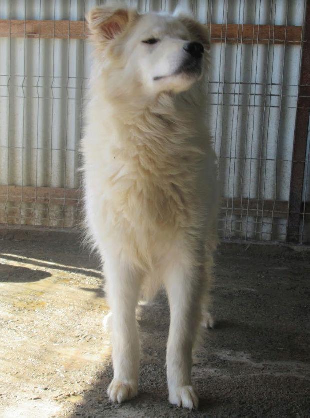 KIOWA !! + de 3 ans de box !! femelle, née environ en mars 2014, taille moyenne (Pascani)- REMEMBER ME LAND - Page 2 Kiowa211