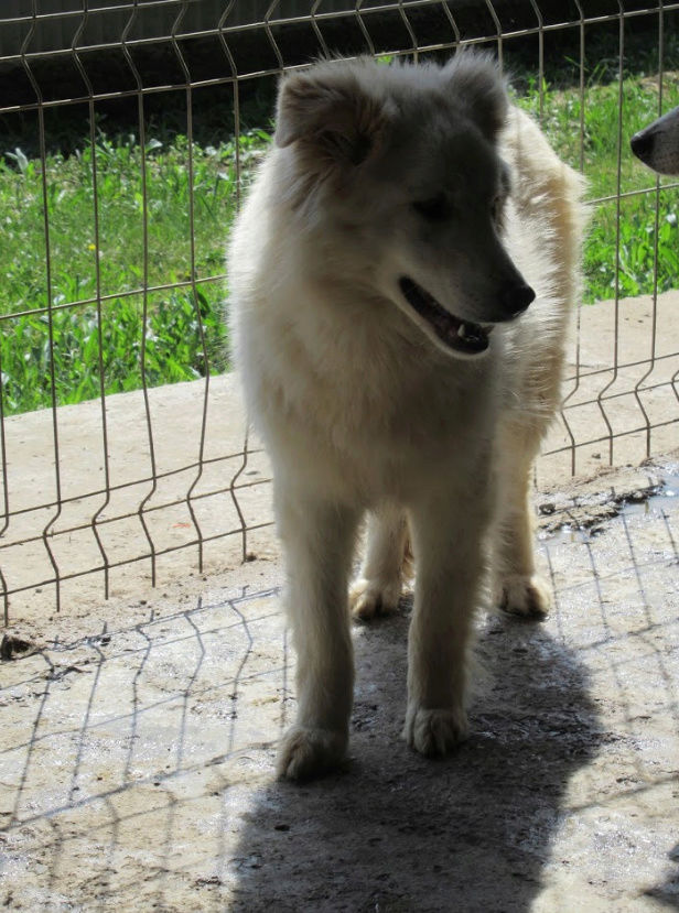 KIOWA !! + de 3 ans de box !! femelle, née environ en mars 2014, taille moyenne (Pascani)- REMEMBER ME LAND - Page 2 Kiowa310