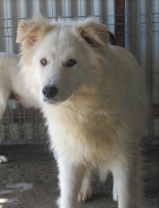 KIOWA !! + de 4 ans de box !! femelle, née environ en mars 2014, taille moyenne - REMEMBER ME LAND - Page 2 Kiowa410