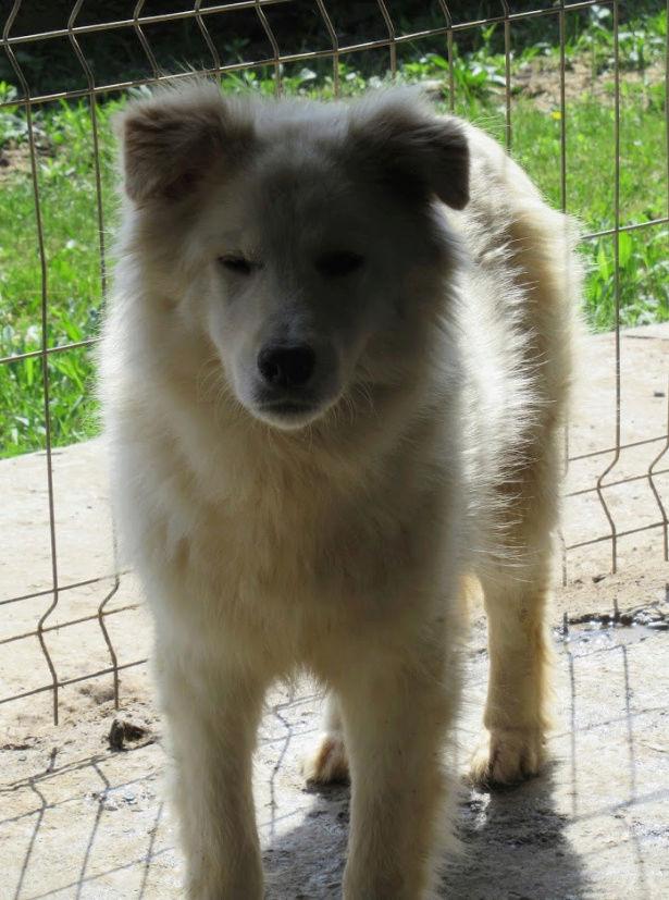 KIOWA !! + de 3 ans de box !! femelle, née environ en mars 2014, taille moyenne (Pascani)- REMEMBER ME LAND - Page 2 Kiowa510