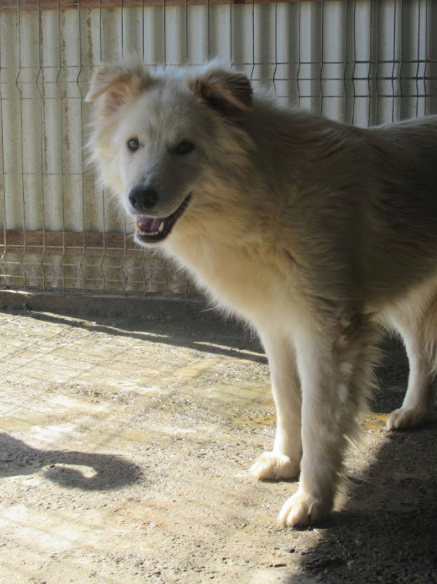 KIOWA !! + de 4 ans de box !! femelle, née environ en mars 2014, taille moyenne - REMEMBER ME LAND - Page 2 Kiowa511