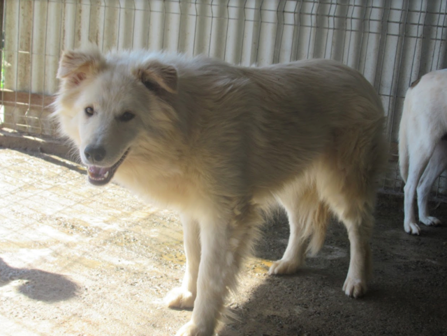 KIOWA !! + de 3 ans de box !! femelle, née environ en mars 2014, taille moyenne (Pascani)- REMEMBER ME LAND - Page 2 Kiowa610