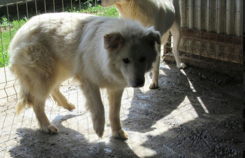 KIOWA !! + de 4 ans de box !! femelle, née environ en mars 2014, taille moyenne - REMEMBER ME LAND - Page 2 Kiowa810
