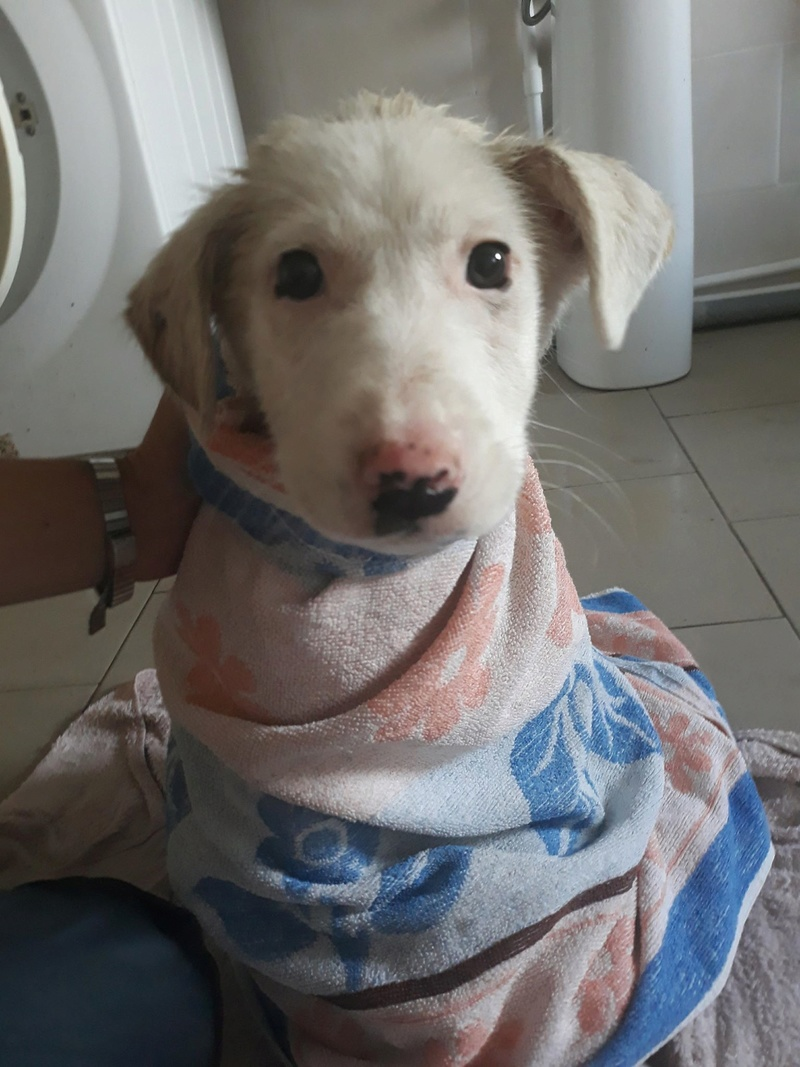 LAZARRE - joli mâle croisée de grande taille adulte, né en janvier 2018. Handicapé (PASCANI) - Adopté par Sabine (Belgique)  - décédé Lazarr21