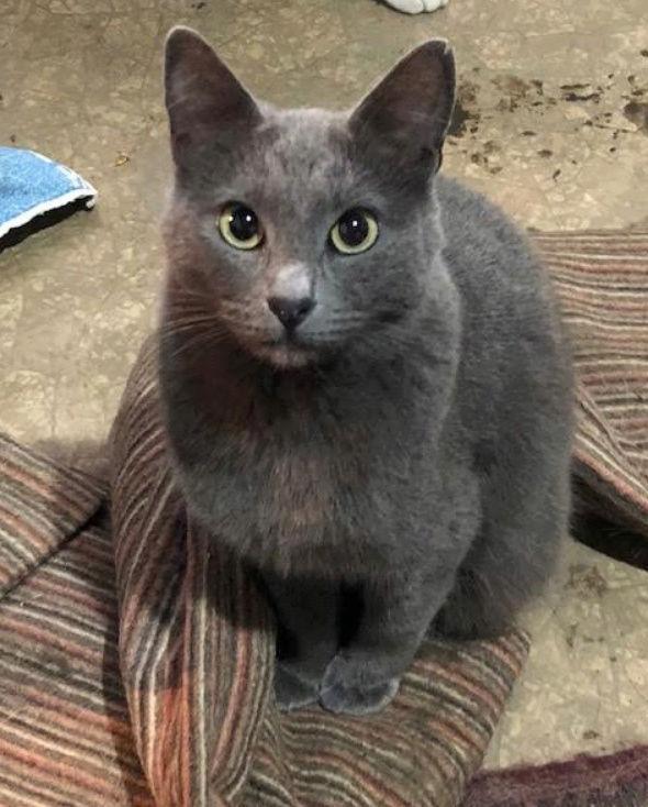 LEA (ex LOLLO BRIGITA) - chat femelle, née en 2015 - CAMELIA BUCAREST - Adoptée par Veronica (Belgique) Lolo_b11