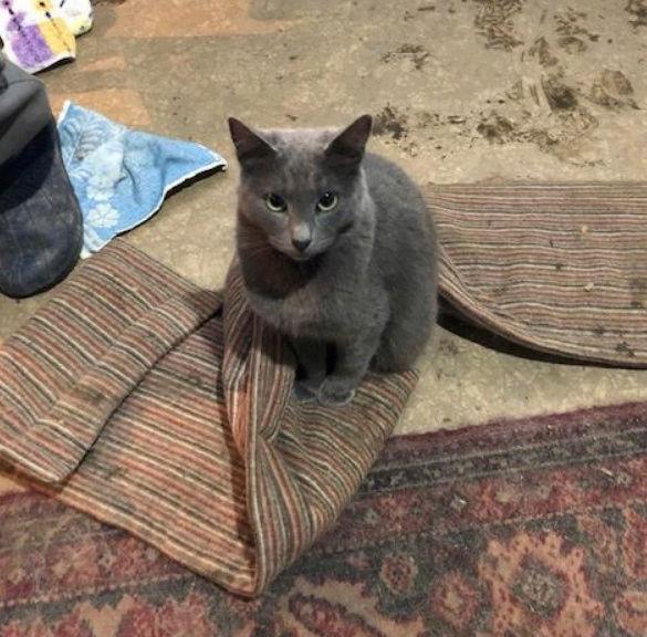LEA (ex LOLLO BRIGITA) - chat femelle, née en 2015 - CAMELIA BUCAREST - Adoptée par Veronica (Belgique) Lolo_b12