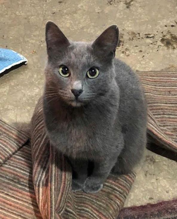 LEA (ex LOLLO BRIGITA) - chat femelle, née en 2015 - CAMELIA BUCAREST - Adoptée par Veronica (Belgique) Lolo_b14