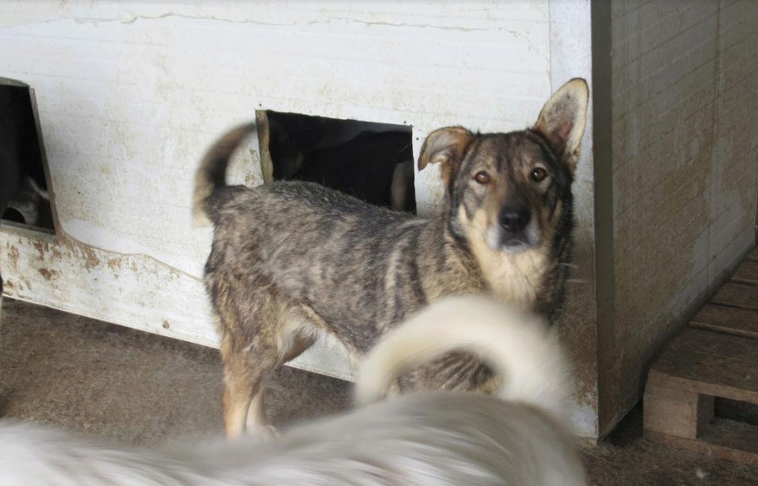 LUPI !! + de 3 ans de box !! - femelle , née environ en 2010, typée chien loup de sarloos, taille moyenne - REMEMBER ME LAND - Page 2 Lupi410
