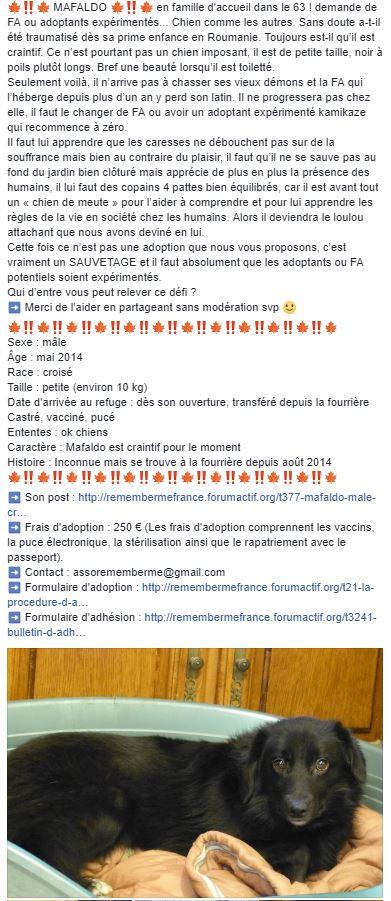 MAFALDO - Mâle croisé, petite taille (PASCANI) - Adopté par Irène (74) - Page 12 Mafald10