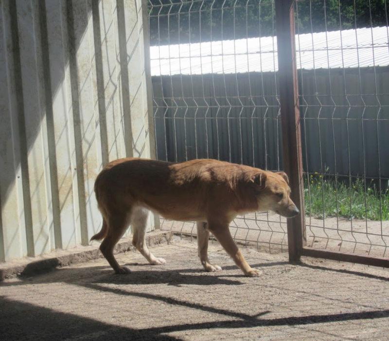 MAIKA - chienne croisée de taille moyenne, née 2015 - (Pascani) REMEMBER ME LAND - Page 2 Maika110