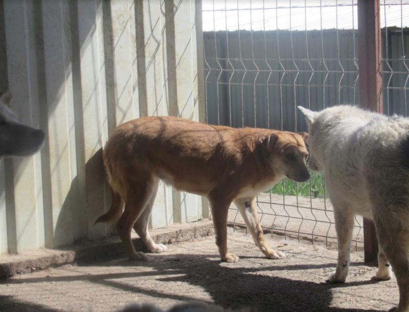 MAIKA - chienne croisée de taille moyenne, née 2015 - (Pascani) REMEMBER ME LAND - Page 2 Maika310