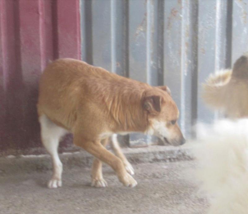 MAIKA - chienne croisée de taille moyenne, née 2015 - (Pascani) REMEMBER ME LAND - Page 2 Maika410
