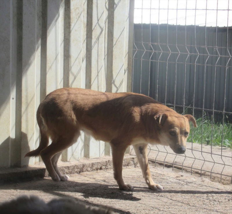 MAIKA - chienne croisée de taille moyenne, née 2015 - (Pascani) REMEMBER ME LAND - Page 2 Maika510