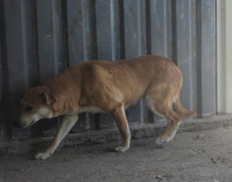 MAIKA - chienne croisée de taille moyenne, née 2015 - (Pascani) REMEMBER ME LAND - Page 2 Maika610