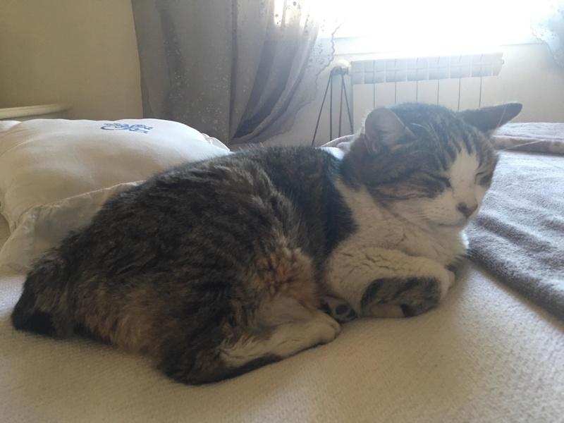 MINA - chat mâle très affectueux, estimé 10 ans - EN FA chez Christine (dpt 83) - DECEDE Mina110