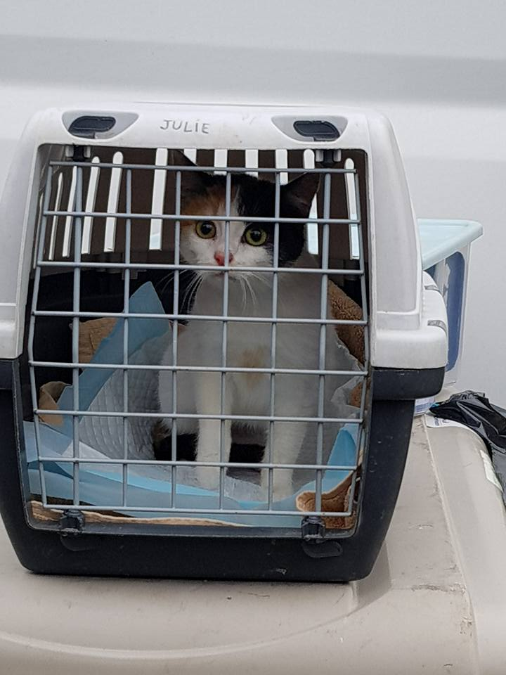 BICKY (ex NASKA) - chaton femelle, née environ novembre 2017 - adoptée par Lorène et Julien (75) Naska111