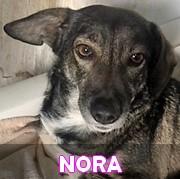 Les adultes de petite taille en Roumanie en un clin d'oeil Nora10