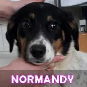 Les adultes de taille moyenne en Roumanie en un clin d'oeil Norman10