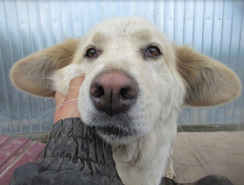 OCARINA - femelle croisée de taille moyenne, née environ en janvier 2011 (PASCANI) - REMEMBER ME LAND - Adoptée par Camille (57) Ocarin30