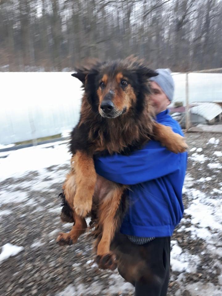 ORGANZA, femelle croisée berger allemand âgée taille moyenne née environ 2002 (Pascani)- REMEMBER ME LAND - En FALD chez lakota03 (03)-Decedee - Page 5 Organz29