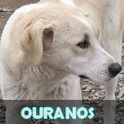Les adultes de taille moyenne en Roumanie en un clin d'oeil Ourano12