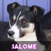 Association Remember Me France : sauver et adopter un chien roumain Salome10
