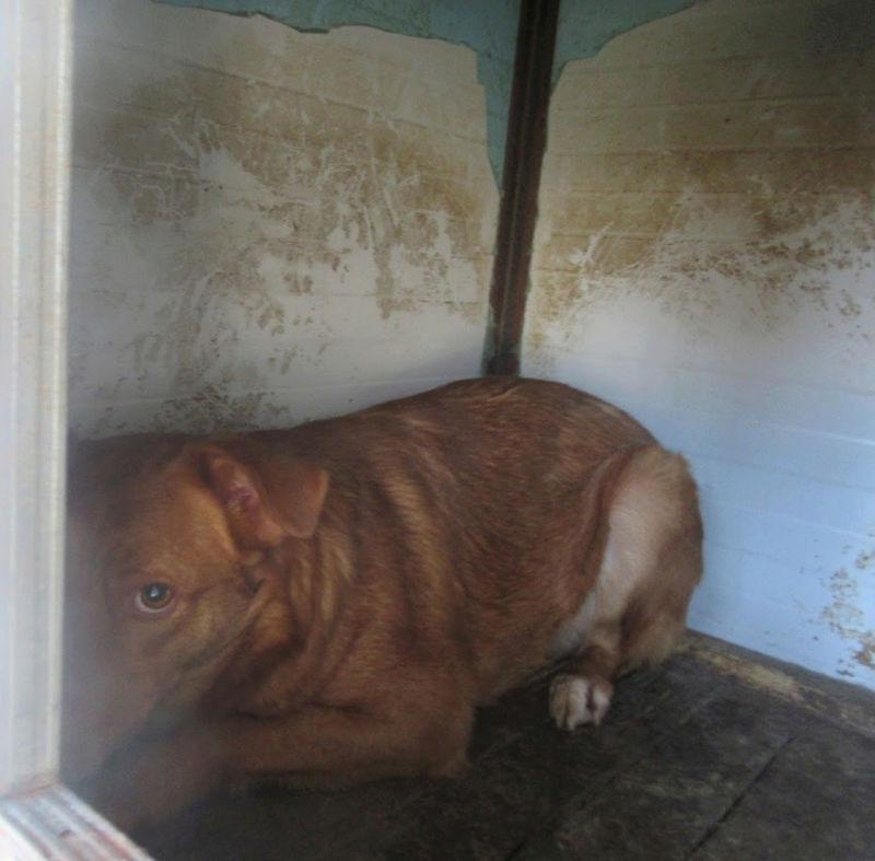 SANKUKA, mâle, croisé, né en 2014, taille moyenne 20kg - REMEMBER ME LAND Sankuk13