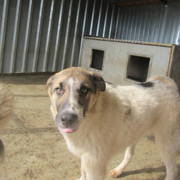 TEXAS, mâle croisé, de taille moyenne, né environ en avril 2017 - REMEMBER ME LAND - ADOPTE PAR CORINNE (Belgique) Texas510