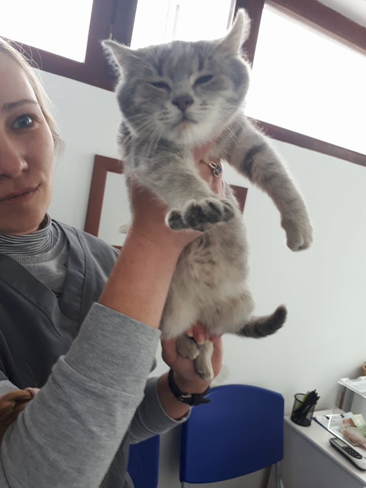 Miss TIGRIS - chat femelle, née en octobre 2017 - en FA chez Abysse (92) - Adoptée par Anne (Belgique) - !! EN FUGUE HELP !! Tigris10