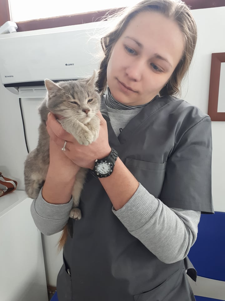 Miss TIGRIS - chat femelle, née en octobre 2017 - en FA chez Abysse (92) - Adoptée par Anne (Belgique) - !! EN FUGUE HELP !! Tigris12