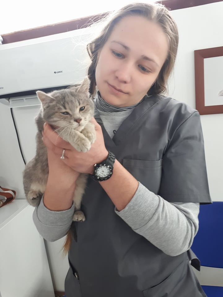 Miss TIGRIS - chat femelle, née en octobre 2017 - en FA chez Abysse (92) - Adoptée par Anne (Belgique) - !! EN FUGUE HELP !! Tigris13
