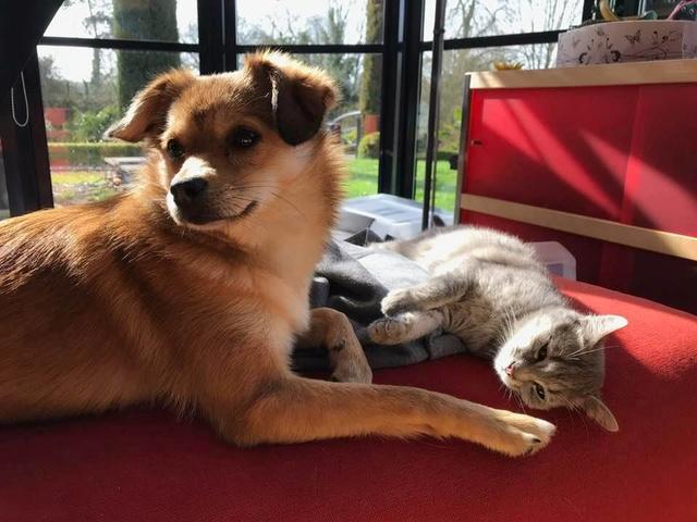 Miss TIGRIS - chat femelle, née en octobre 2017 - en FA chez Abysse (92) - Adoptée par Anne (Belgique) - !! EN FUGUE HELP !! Tigris15