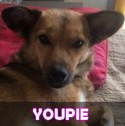 Association Remember Me France : sauver et adopter un chien roumain Youpie22