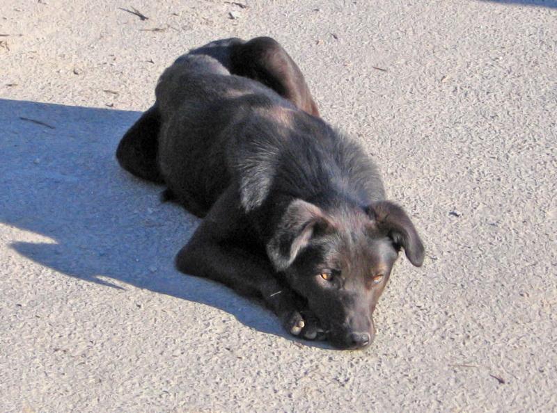 djina - DJINA X-F, taille moyenne, env. 18 kg, née 2012 Ancien de Backa (BELLA) Prête à voyager Img_0110