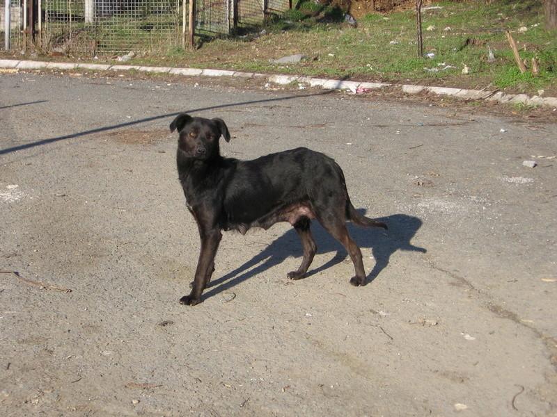 djina - DJINA X-F, taille moyenne, env. 18 kg, née 2012 Ancien de Backa (BELLA) Prête à voyager Img_0111