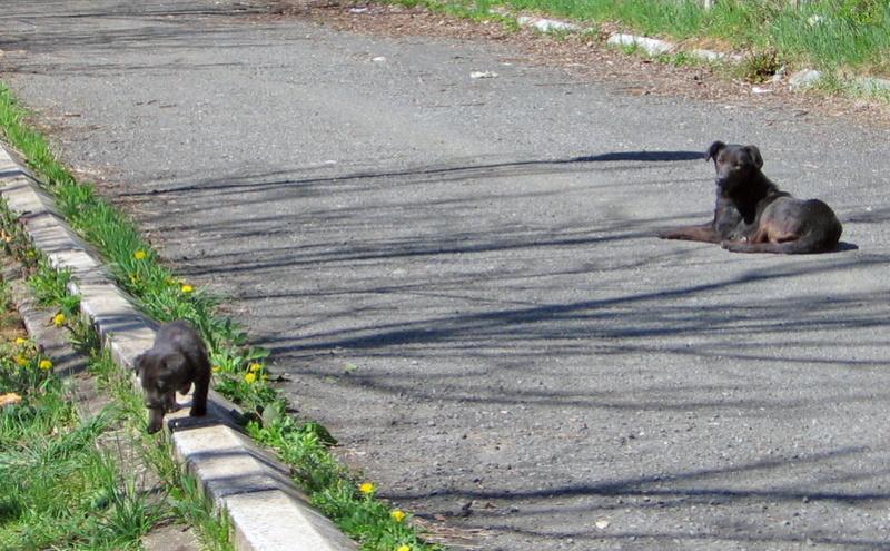 djina - DJINA X-F, taille moyenne, env. 18 kg, née 2012 Ancien de Backa (BELLA) Prête à voyager Img_0112