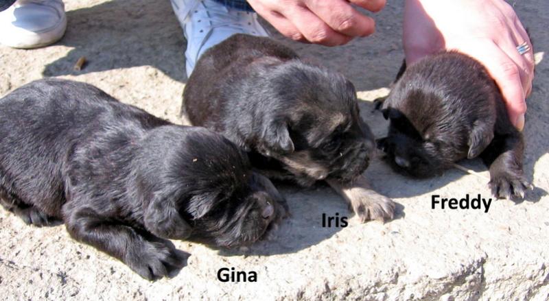 djina - DJINA X-F, taille moyenne, env. 18 kg, née 2012 Ancien de Backa (BELLA) Prête à voyager Img_0114