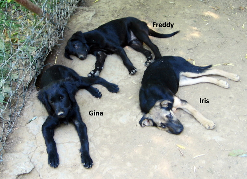 djina - DJINA X-F, taille moyenne, env. 18 kg, née 2012 Ancien de Backa (BELLA) Prête à voyager Img_0115