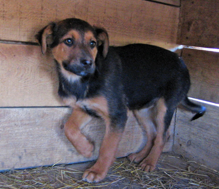 JELLY (ex JERRY) F-X, taille moyenne, env. 20 kg, née 2011 (BACKA) - Prise en charge SPA Pontarlier Pictur14