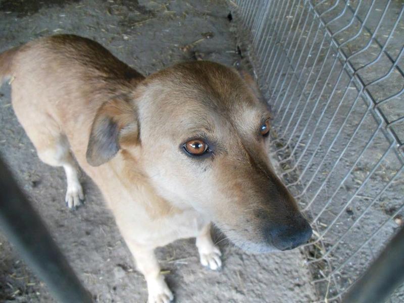 BAILEYS, née en 2011, sauvée de l'équarrissage - parrainée par Nathalie -SOS-R-SC - Page 2 30516610
