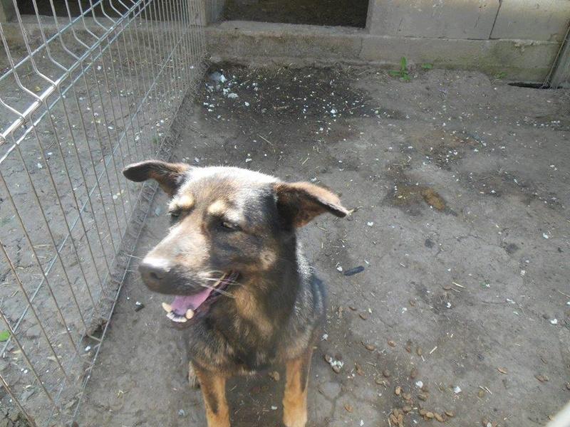 TINNA,  née en 2012 trouvée dans la rue par Lenuta - marrainée par lilirez02 -R-SC 31948811
