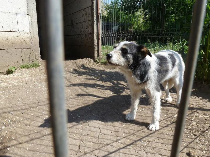 MACUMBA - griffon 8 ans  (4 ans de refuge) -Asso Arche d'Eternité (Roumanie) 32370911